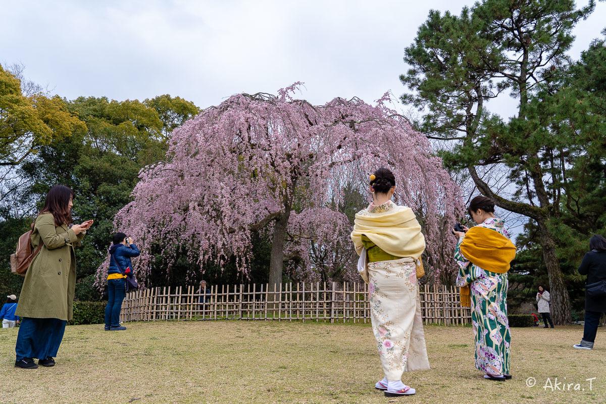 京都の桜 2019 〜2〜_f0152550_21080789.jpg