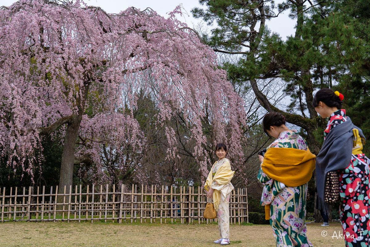京都の桜 2019 〜2〜_f0152550_21081328.jpg