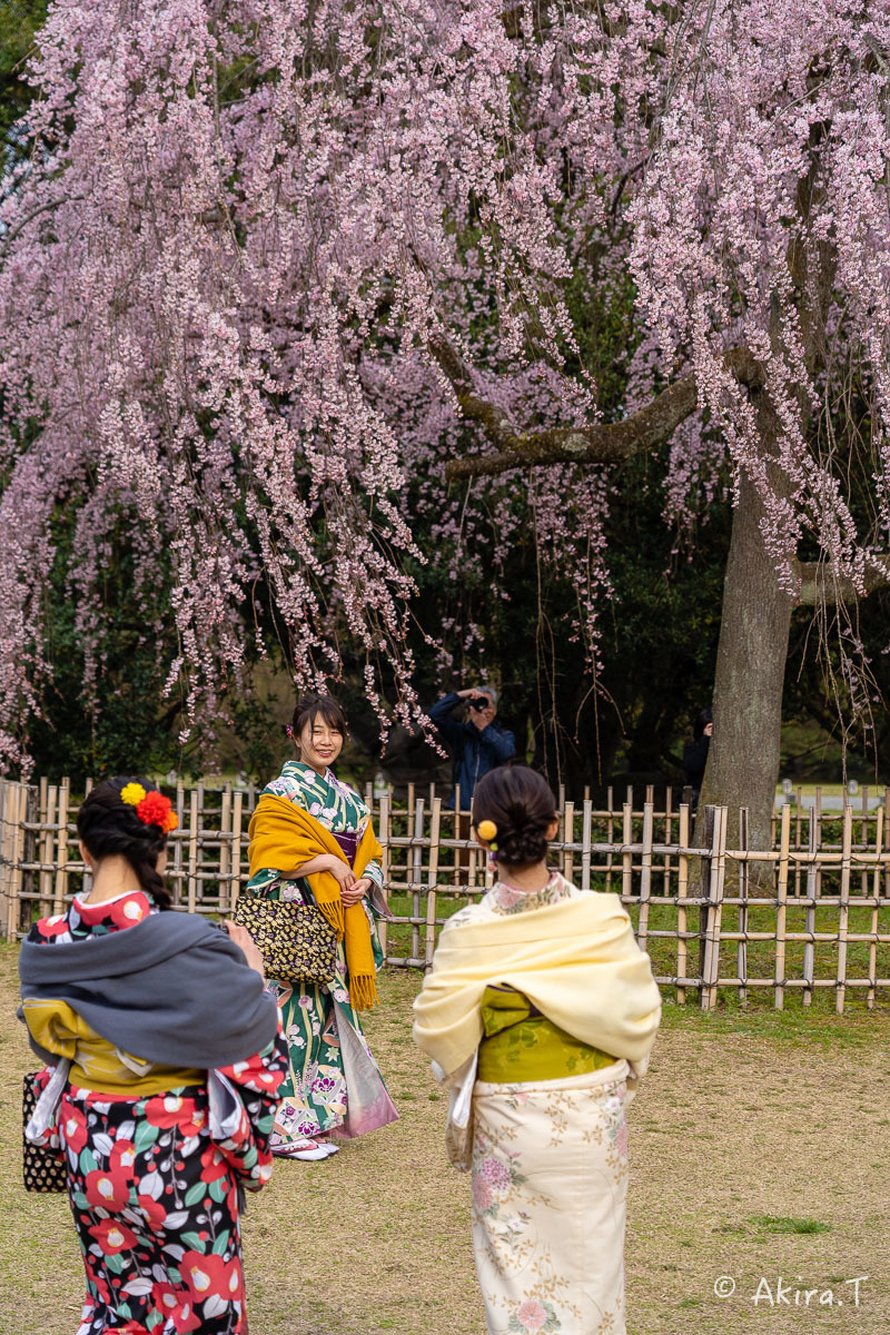 京都の桜 2019 〜2〜_f0152550_21082106.jpg