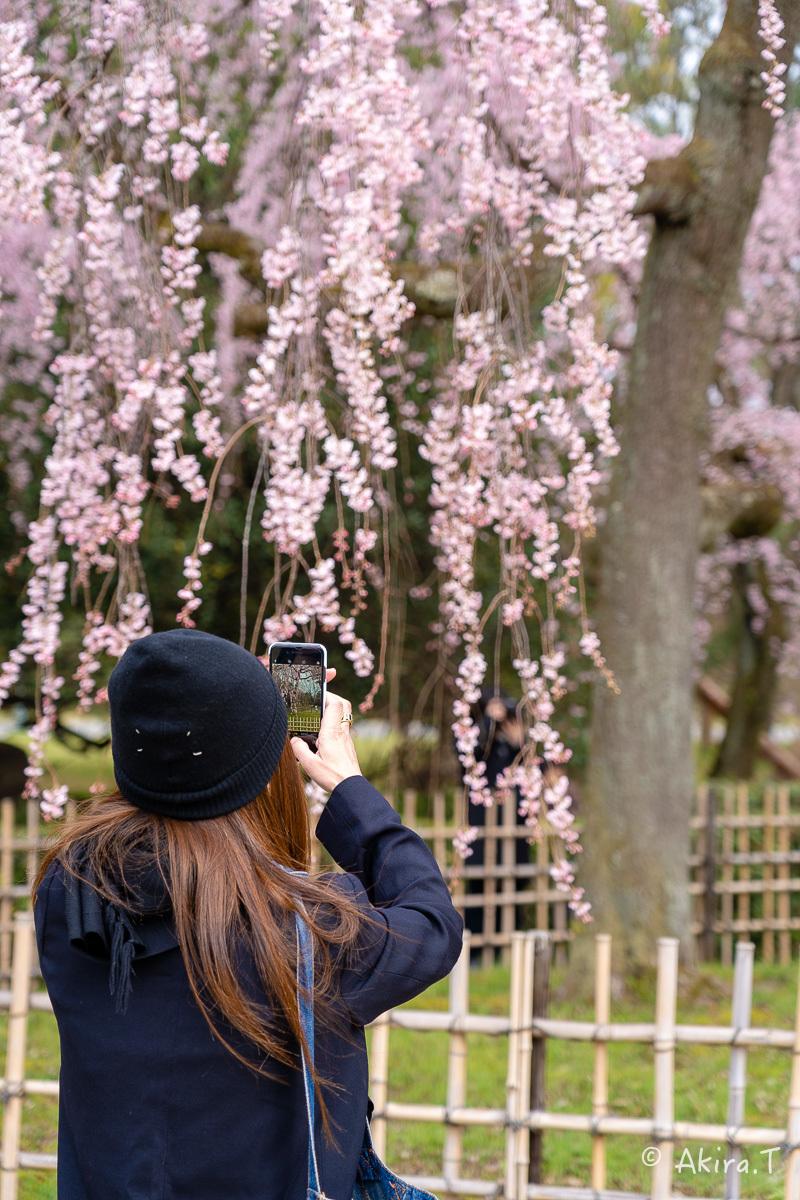 京都の桜 2019 〜2〜_f0152550_21082995.jpg
