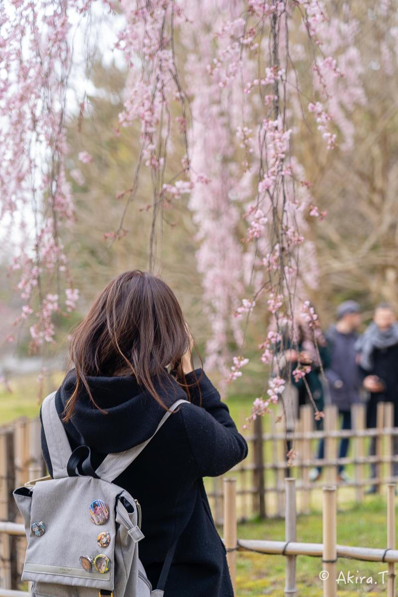 京都の桜 2019 〜2〜_f0152550_21084505.jpg