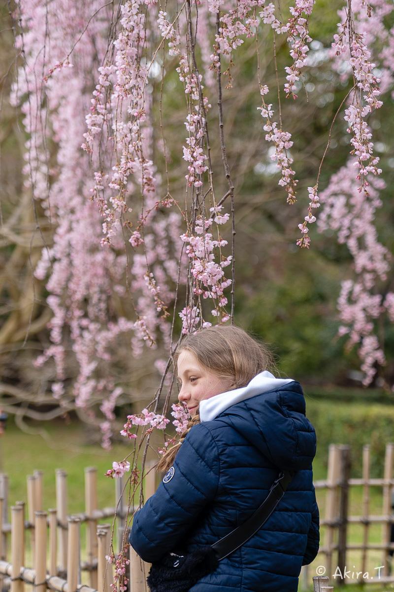 京都の桜 2019 〜2〜_f0152550_21085361.jpg