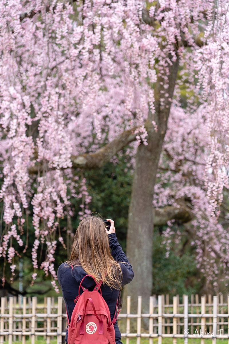 京都の桜 2019 〜2〜_f0152550_21090351.jpg