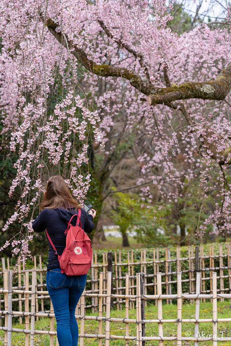 京都の桜 2019 〜2〜_f0152550_21104221.jpg