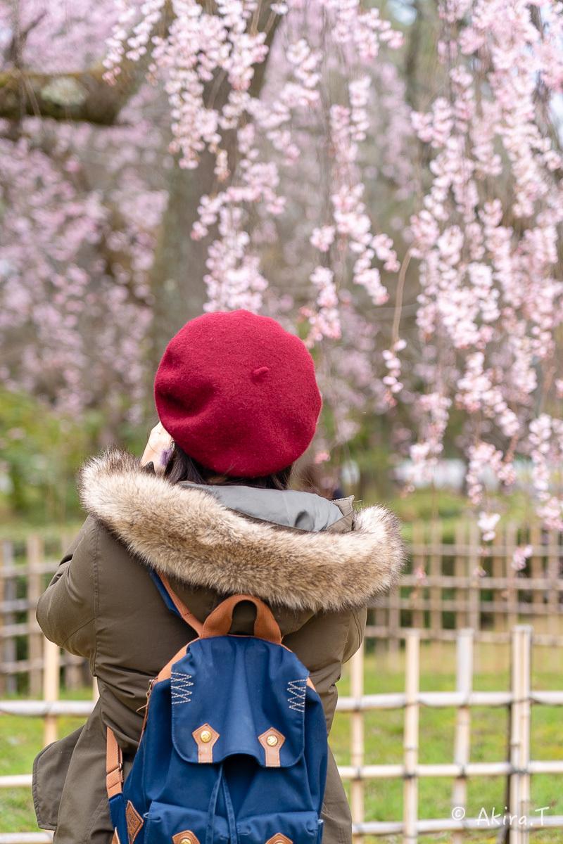 京都の桜 2019 〜2〜_f0152550_21105843.jpg