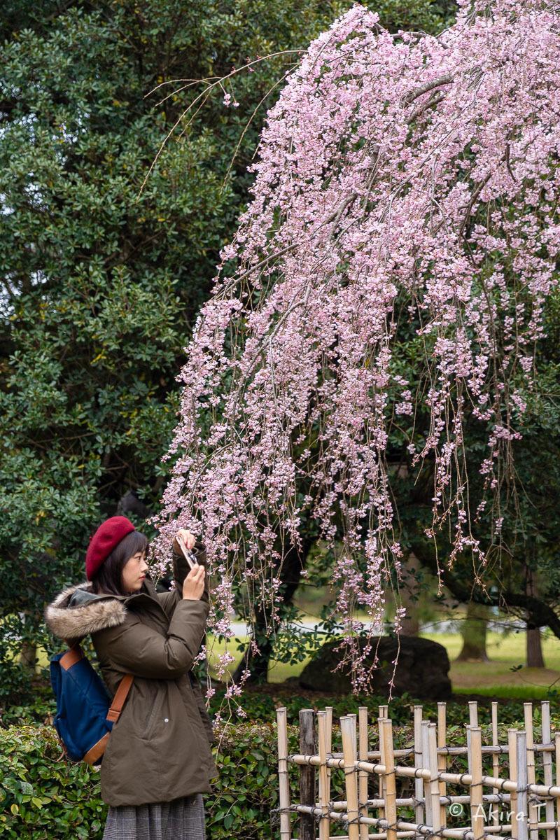 京都の桜 2019 〜2〜_f0152550_21111153.jpg