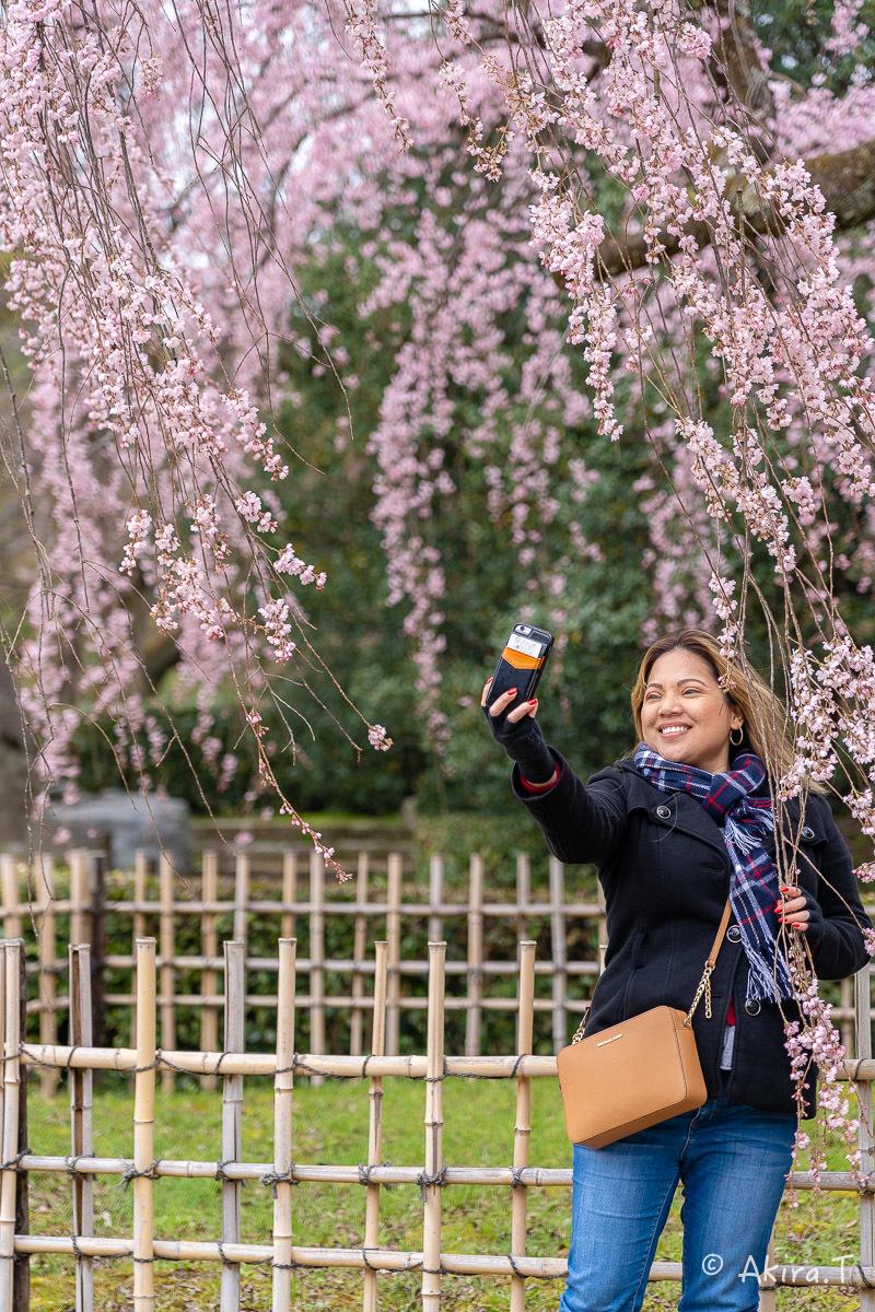 京都の桜 2019 〜2〜_f0152550_21112753.jpg