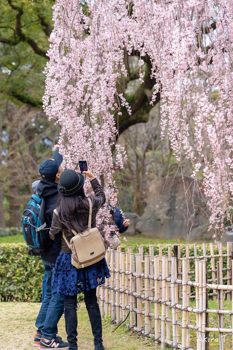 京都の桜 2019 〜2〜_f0152550_21114150.jpg