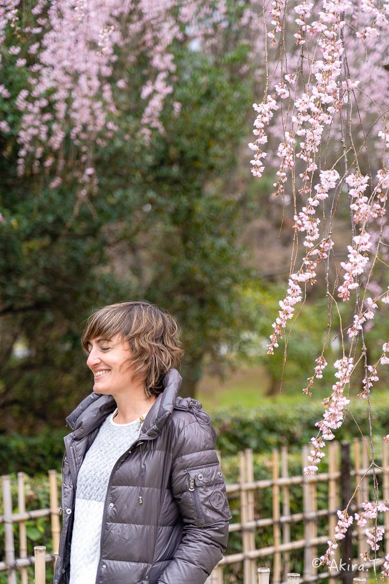 京都の桜 2019 〜2〜_f0152550_21115639.jpg