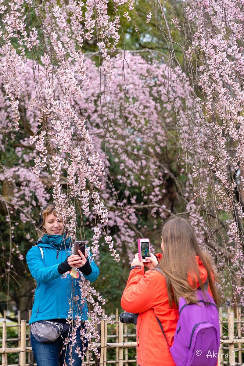 京都の桜 2019 〜2〜_f0152550_21122836.jpg