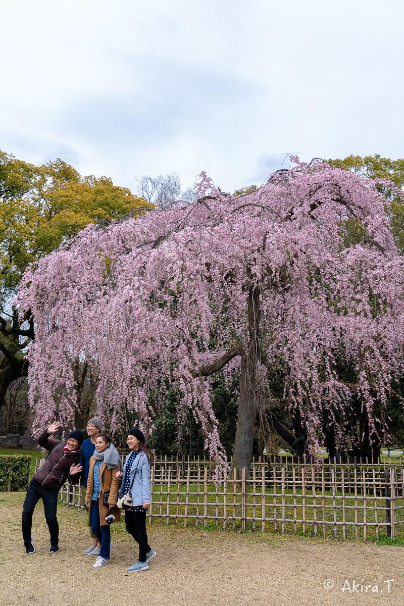 京都の桜 2019 〜2〜_f0152550_21124191.jpg