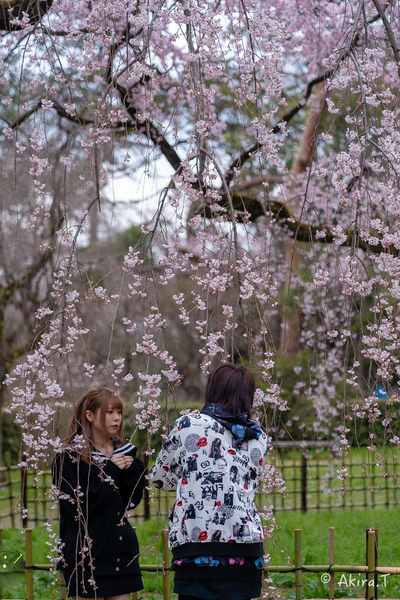 京都の桜 2019 〜2〜_f0152550_21125404.jpg