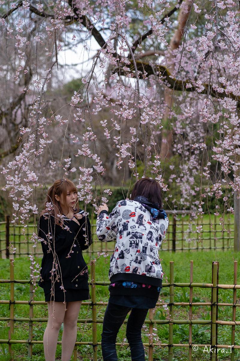 京都の桜 2019 〜2〜_f0152550_21131024.jpg