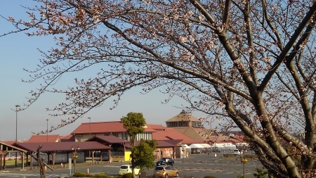 春はもう間近_c0141652_08475526.jpg