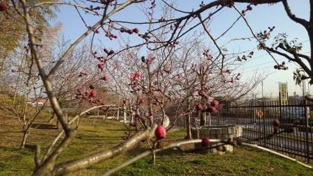 春はもう間近_c0141652_08480402.jpg