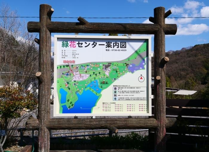 和歌山県植物公園緑花センター  2019-03-26 00:00   _b0093754_17460607.jpg