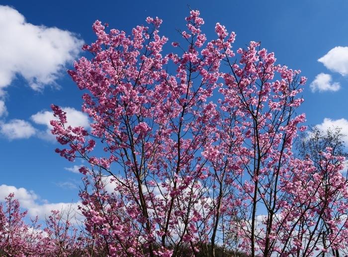 和歌山県植物公園緑花センター  2019-03-26 00:00   _b0093754_17464579.jpg