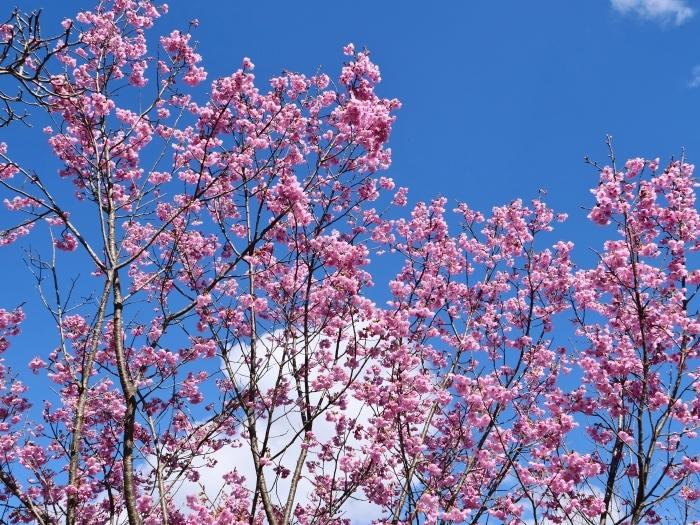 和歌山県植物公園緑花センター  2019-03-26 00:00   _b0093754_17471769.jpg