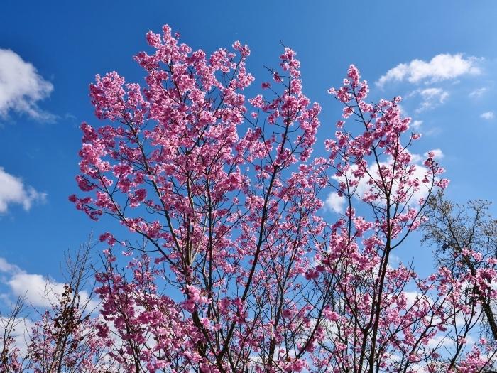 和歌山県植物公園緑花センター  2019-03-26 00:00   _b0093754_17480348.jpg