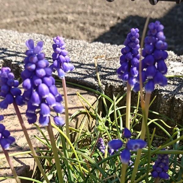 ++春に感じること*++_e0354456_08160274.jpg