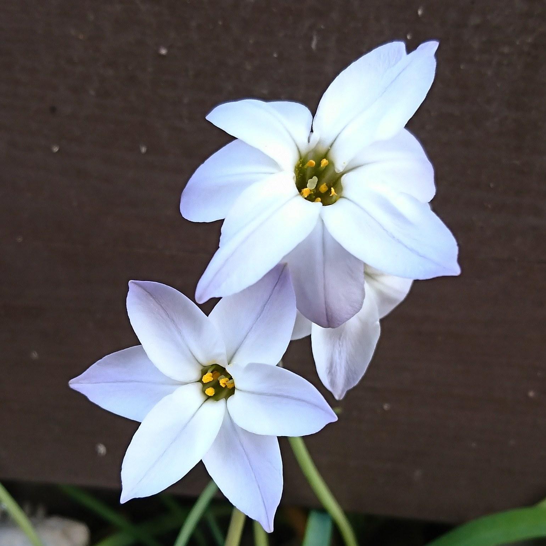 ++春に感じること*++_e0354456_08161195.jpg