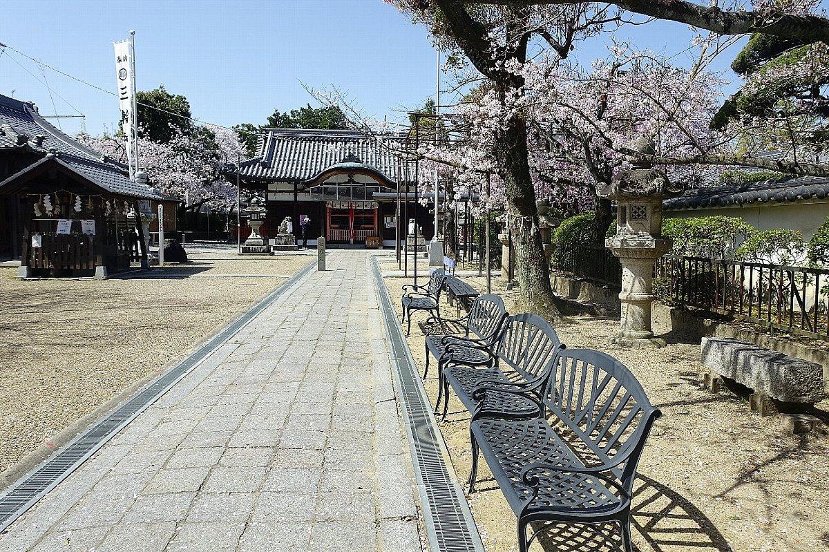 高槻市 筒井池公園の桜_c0112559_08115600.jpg