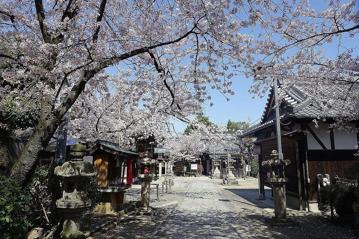 高槻市 筒井池公園の桜_c0112559_08125493.jpg