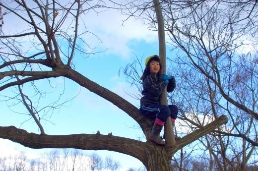 庭の栗の木で即席ブランコ、木登り_c0110869_08550950.jpg