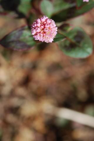 ピンク~~_b0189573_13590066.jpg