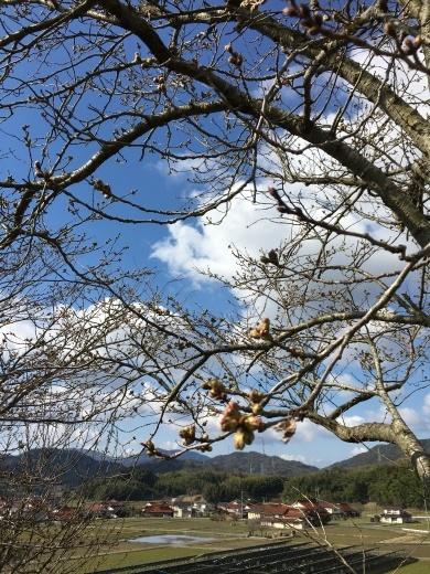 桜だより①  〜裏山の桜2019〜_c0334574_19225933.jpg