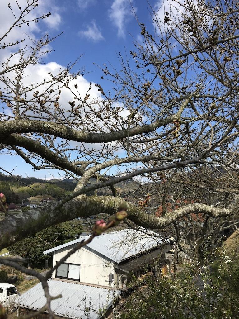 桜だより①  〜裏山の桜2019〜_c0334574_19231102.jpg