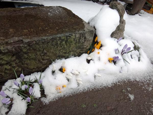 春の淡雪にしては、けっこうな積もり方で・・・♪_a0136293_16511313.jpg