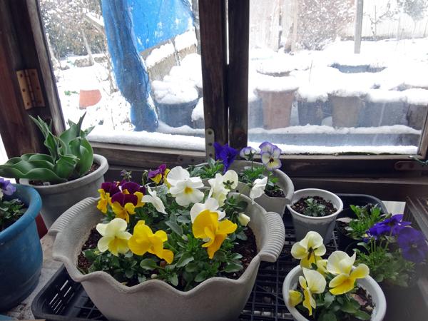春の淡雪にしては、けっこうな積もり方で・・・♪_a0136293_16520491.jpg
