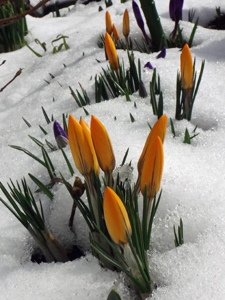 春の淡雪にしては、けっこうな積もり方で・・・♪_a0136293_16592758.jpg