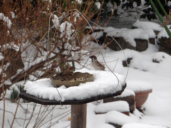 春の淡雪にしては、けっこうな積もり方で・・・♪_a0136293_17002423.jpg