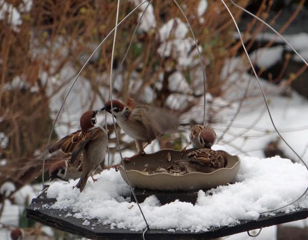 春の淡雪にしては、けっこうな積もり方で・・・♪_a0136293_17023540.jpg