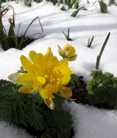 春の淡雪にしては、けっこうな積もり方で・・・♪_a0136293_17032965.jpg