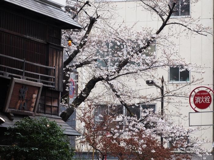 写真展、ついでに都心の桜_f0224100_22013981.jpg