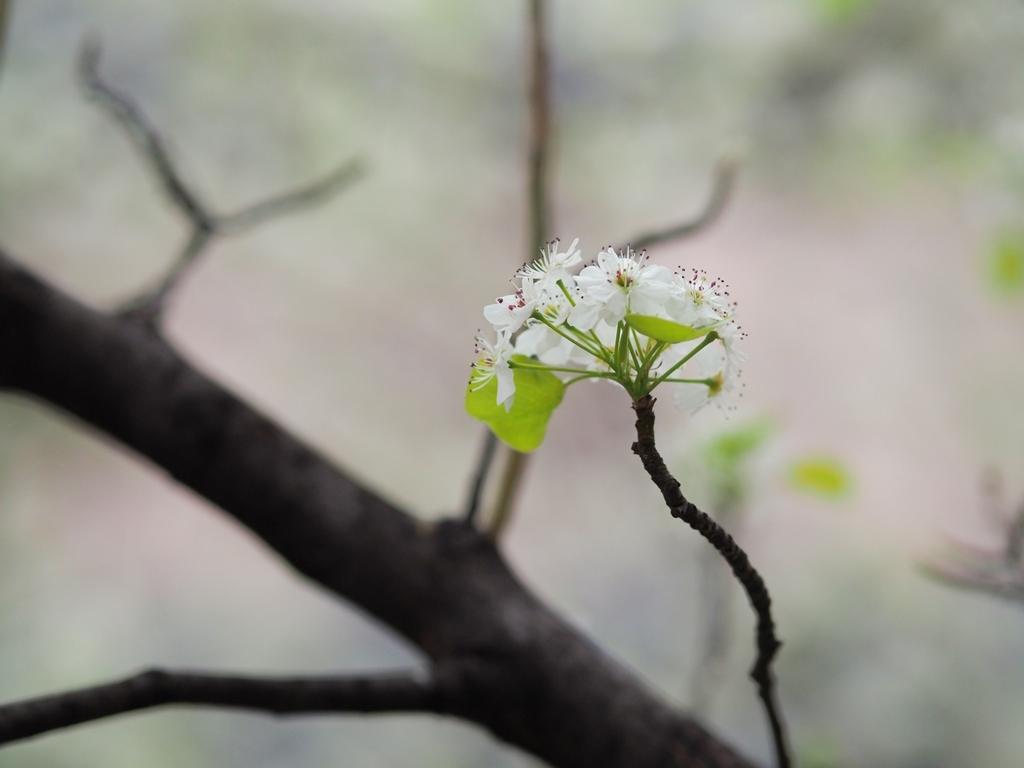 写真展、ついでに都心の桜_f0224100_22020693.jpg