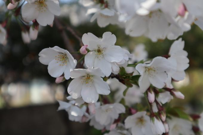 春だよ!   371_b0239402_15235261.jpg