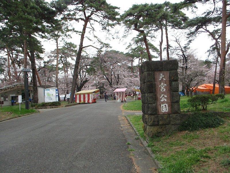 大宮公園の桜_a0138609_14421598.jpg