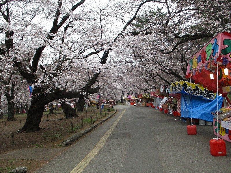 大宮公園の桜_a0138609_14430445.jpg