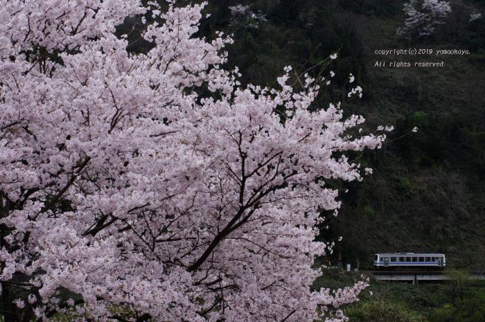 花曇りの日に_d0309612_00164191.jpg