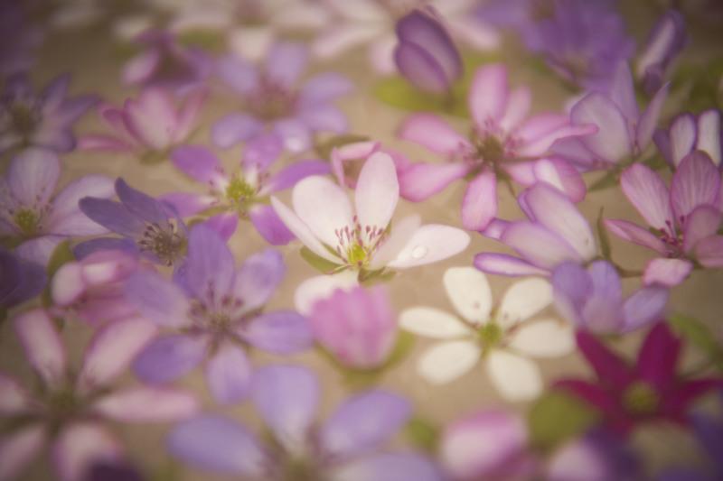 春の妖精_d0370716_20080123.jpg