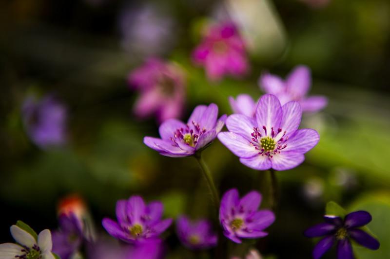春のいざない_d0370716_20225359.jpg