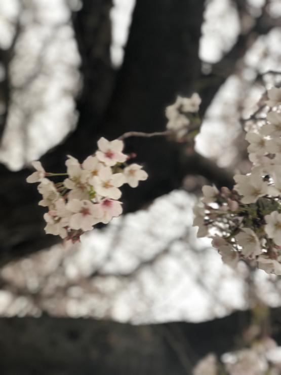 開花って言いますけど(開花から5日目)_b0317723_06352896.jpg