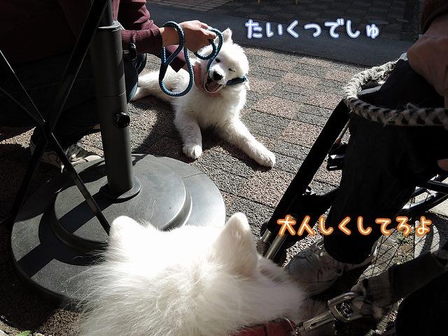 モフモフ男祭り♪_c0062832_15355431.jpg