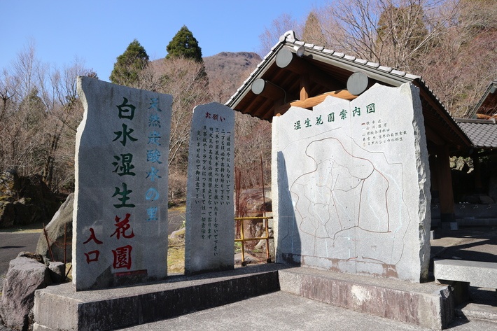 白水湿生花園(カタクリ)&男池(ハルトラノオ)&清滝(ハシリドコロ)!_e0272335_19132796.jpg