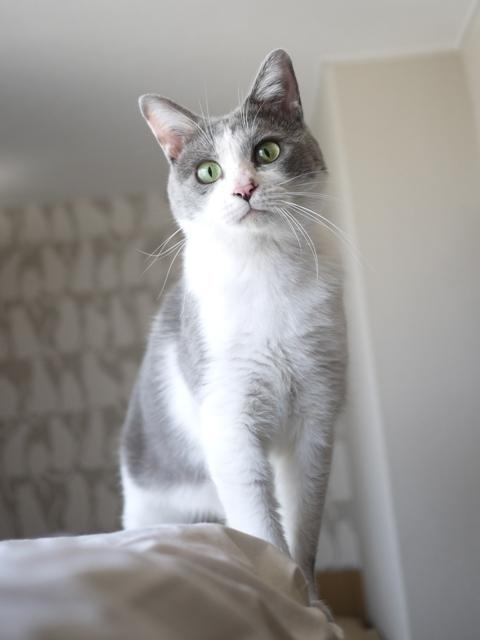猫のお預かり 赤福くん編。_a0143140_16543272.jpg