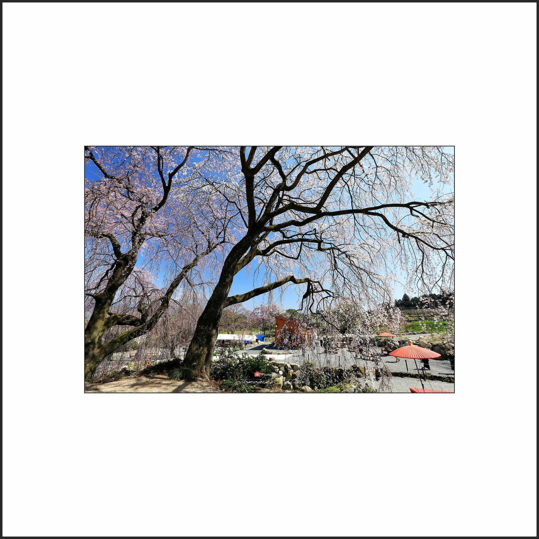 春の陽気_c0253556_06161897.jpg